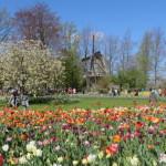 Trasferirsi ad Amsterdam: Consigli Importanti