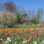 trasferirsi in Olanda